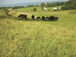 Shenandoah Valley beef producers build awareness of their stewardship practices through their marketing cooperative.