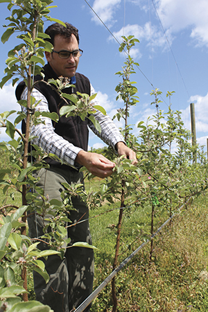 Greg Peck is one of a handful of researchers helping to grow the state's burgeoning cider industry.