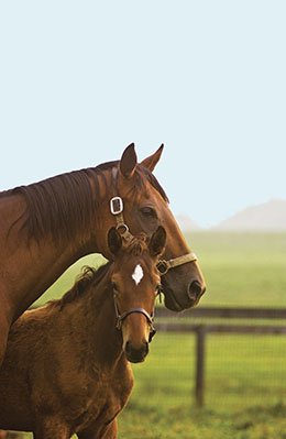 Middleburg AREC; horses / mare and foal