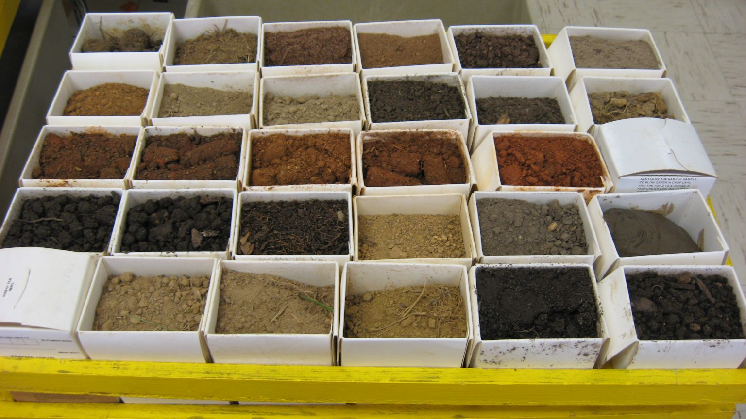 Tray full of soil samples.