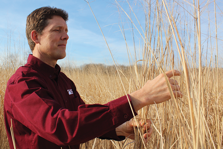 John Fike, associate professor of crop and soil environmental sciences and an Extension specialist, studies crops such as miscanthus to determine their feasibility as sources of biofuel.