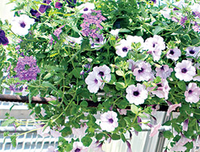 Annual horticulture plant sale grows into multiday spring fling