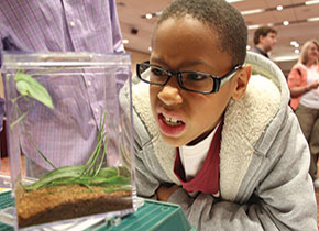 Budding entomologists swarm to Hokie Bugfest