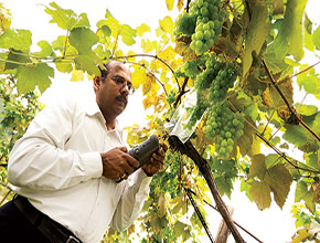 Kumar Mallikarjunan conducts research using the Cyranose 320 to detect chemical vapors in the air surrounding fruit by preprogramming pattern-sensing algorithms to recognize vapors of interest.