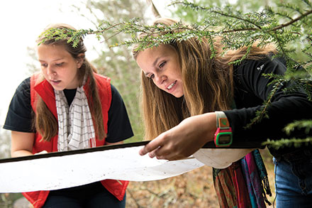 Entomology graduate student Katlin Mooneyham, of Wilmington, North Carolina (right), and research technician Emily Lawrence collect and count beetles in hemlock trees.