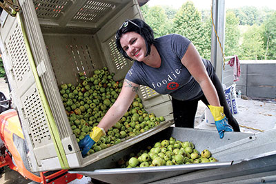 Virginia Tech senior Meg McGuire works at Foggy Ridge Cider in Dugspur, Virginia, where she helps process apples used to make hard cider.