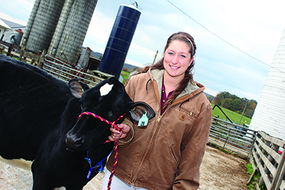 Chelsea Abbott, a junior majoring in dairy science from Fairfield, Vermont, presents a heifer at the Dairy Showcase. The Dairy Showcase was an event that students assessed for the Kohl Centre experience this semester.