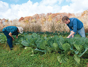 Kentland Farm feeds hungry students and intellectual curiosity