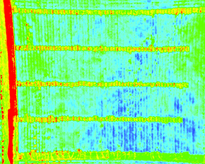Maria Balota (below, right) studies stress in peanut plants with the help of drones that allow her to collect data faster in large research plots. The green colors in an image taken from the drone show drought-stressed and unhealthy peanut plants. The blue shows healthy, well-watered peanuts – the darker the blue, the more efficiently the plants are utilizing water.
