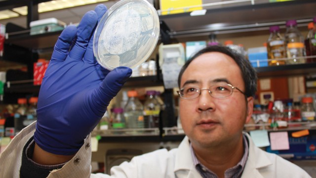 Xiaofeng Wang, assistant professor of plant pathology, physiology, and weed science, studies viral replication.