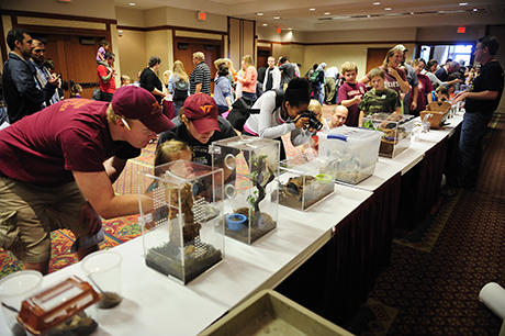 Hokie Bugfest was held at the Inn at Virginia Tech. Bugs are displayed for people who are interested in learning about insects, beetles, and spiders up-close.