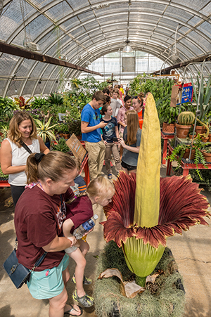 Visiting mother holds her daughter up for a whiff of the corpse flower at the CALS greenhouse on Saturday, August 29, 2015